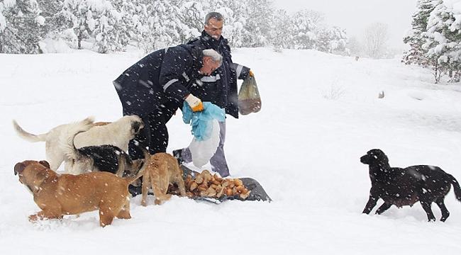 Çayırova Belediyesi'nden sokak hayvanlarına yardım