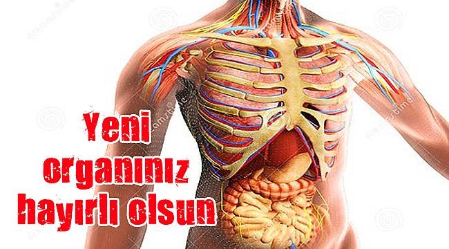 İnsan vücudunda yeni bir organ bulundu