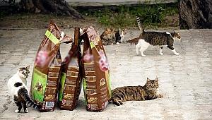 Kedilere mama alma koşuluyla hapisten kurtuldu