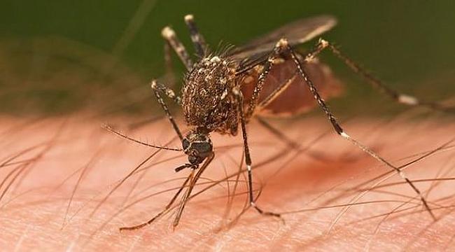 Zika virüsünü taşıyan sinekler Türkiye'de