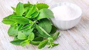 Stevia nedir