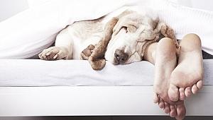Uykuyla alakalı bilmediklerimiz
