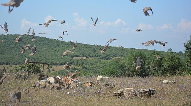 Dilovası'nda yüzlerce keklik doğaya salındı