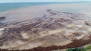Selde 1100 ton fındık zarar gördü