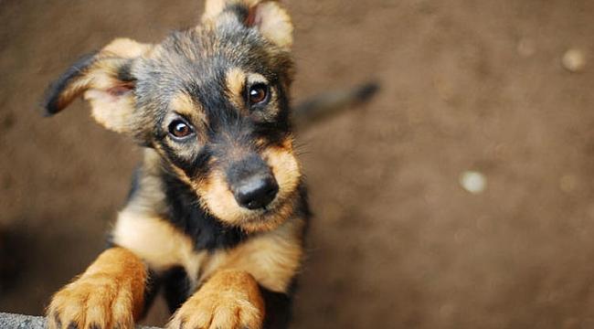 MHP'den yaban hayvanları için kanun teklifi