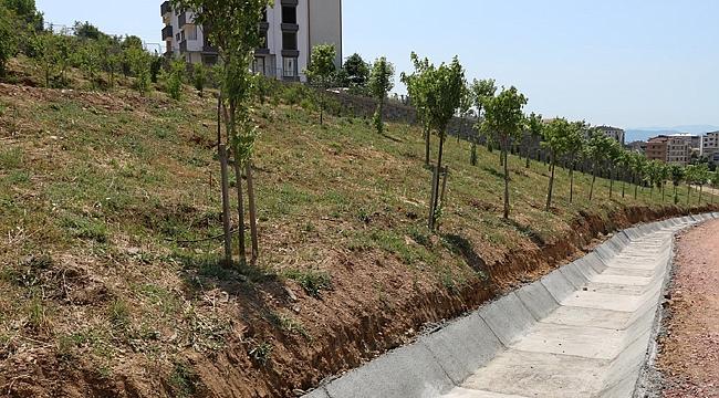 Tatlıkuyu'ya 3 bin ağaç dikildi