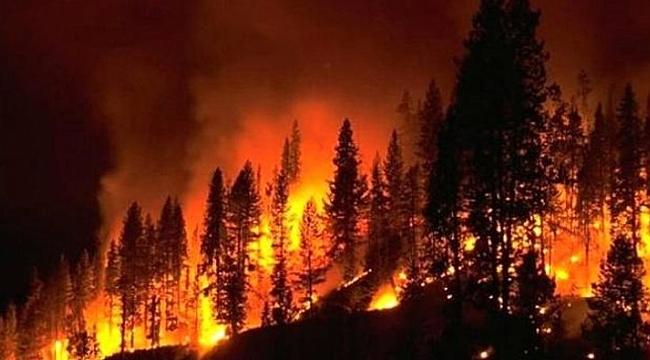 10 günde 8 bin yangın çıktı