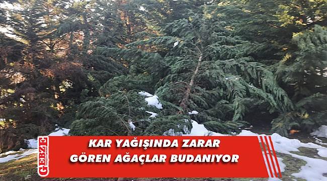Büyükşehir'den ağaçlara budama