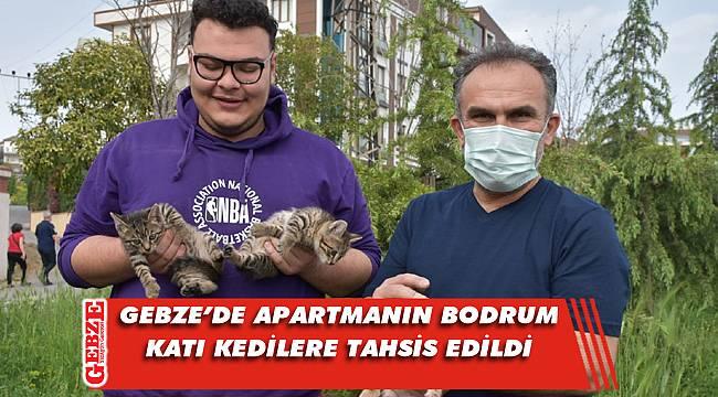 Gebze'de apartman sakinleri yavrulara sahip çıktı