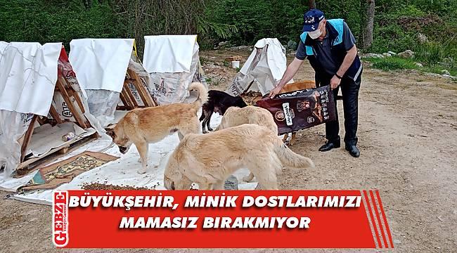 Kocaeli'nde sokak hayvanları unutulmadı