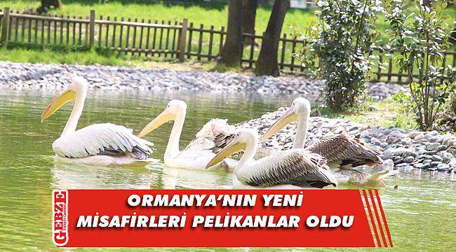 Ormanya Doğal Yaşam Parkı engelli pelikanlara yuva oldu