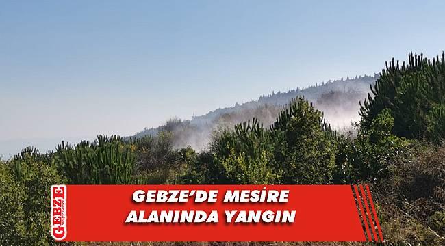 Gebze'deki çamlık alanda yangın çıktı