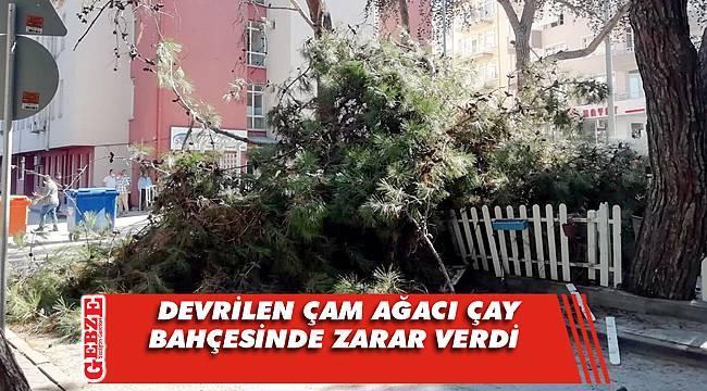 Karamürsel'de devrilen çam ağacı çay bahçesinde zarar verdi