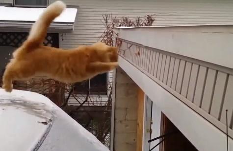 Atlama konusunda beceriksiz olan kediler İZLE