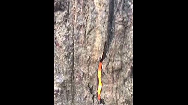 Şeytan Ağacı
