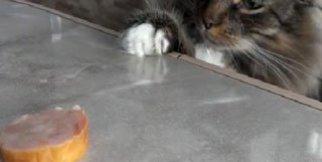 Açlıkla vicdanı arasında kalan kedi